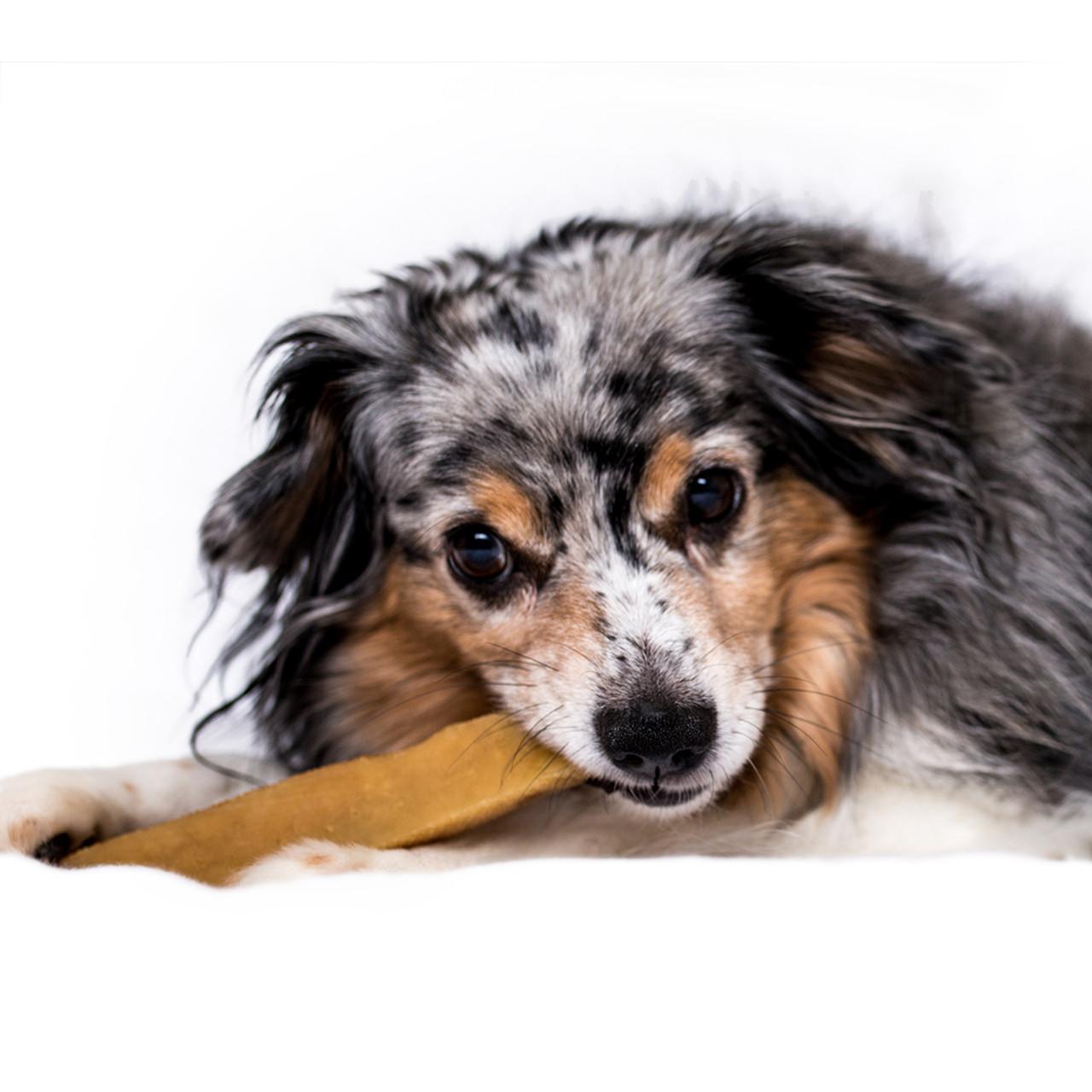 Himalayan Churpi Cheese Dog Chew Treat