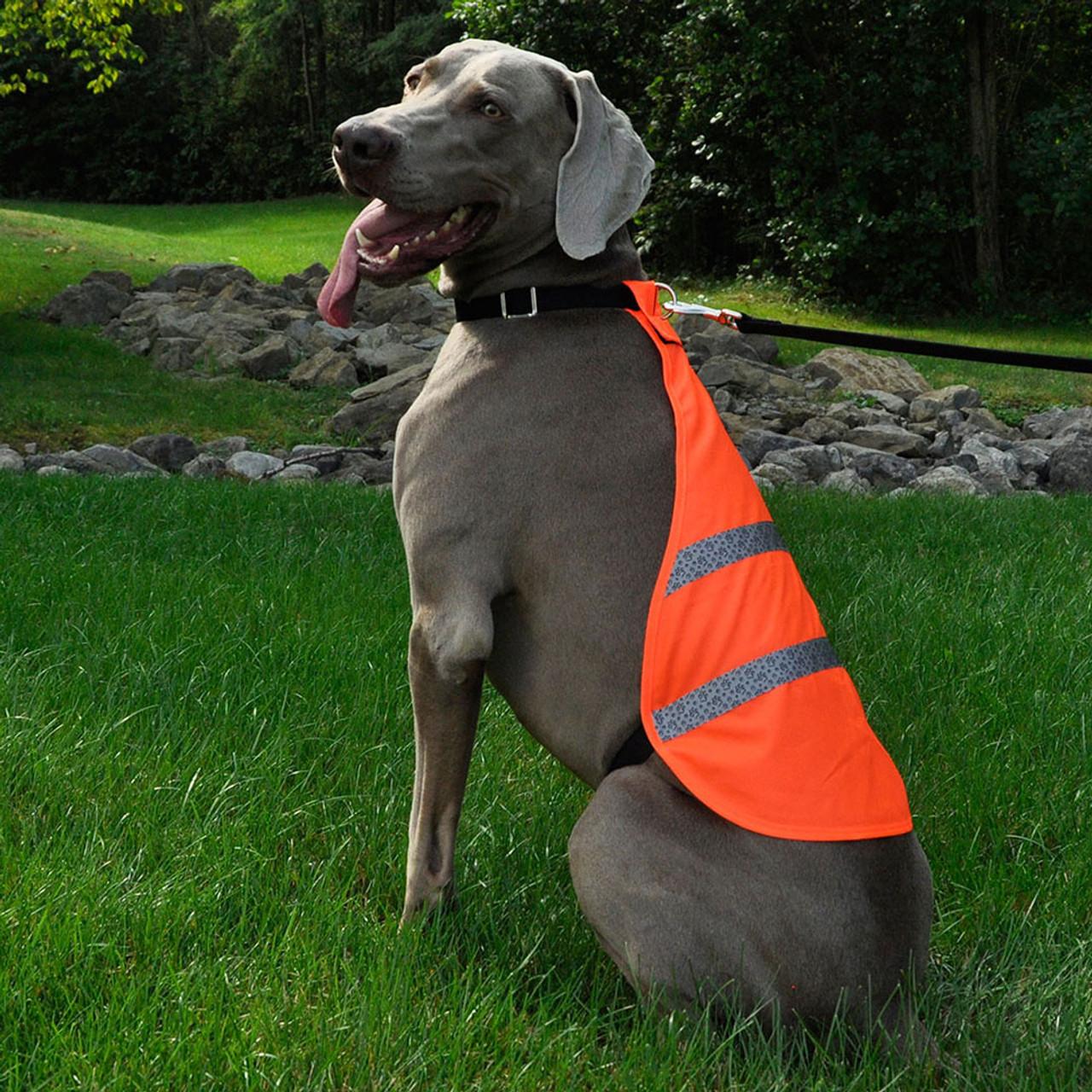Coastal Reflective Dog Safety Vest