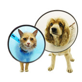 Remedy+Recovery E-Collars for Dogs & Cats