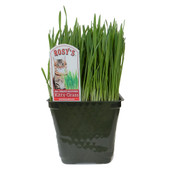 Rosy's 100% Organic Multigrain Kitty Grass for Pets
