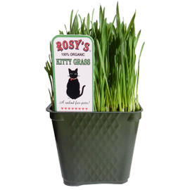 Rosy's 100% Organic Kitty Grass for Pets