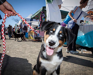 How to: take your dog to outdoor events