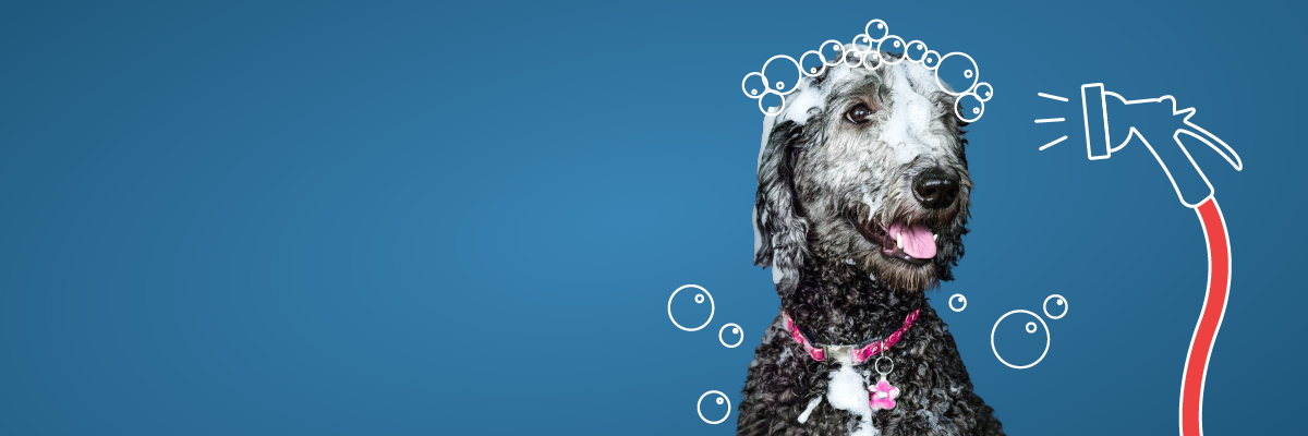 Self-service pet wash