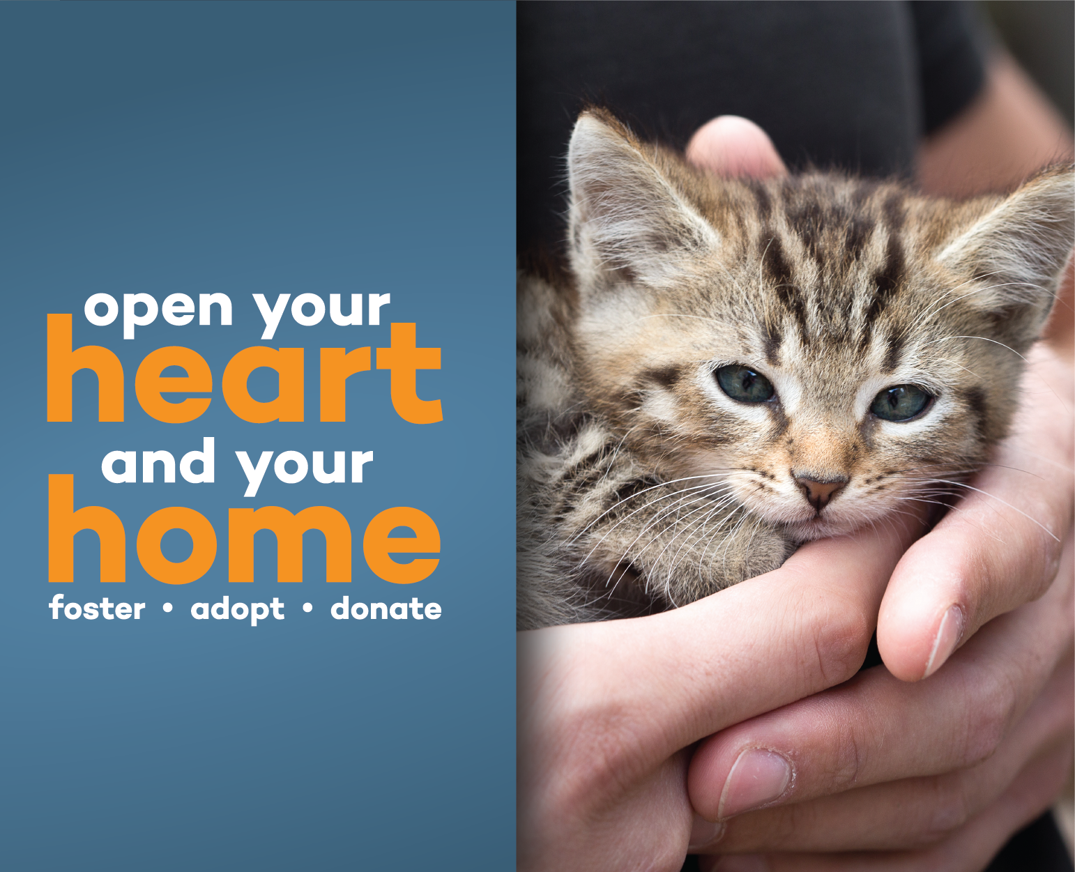 Hands holding a kitten with text that says 'Open your heart and your home. Foster, Adopt, Donate. It's Kitten Season.'
