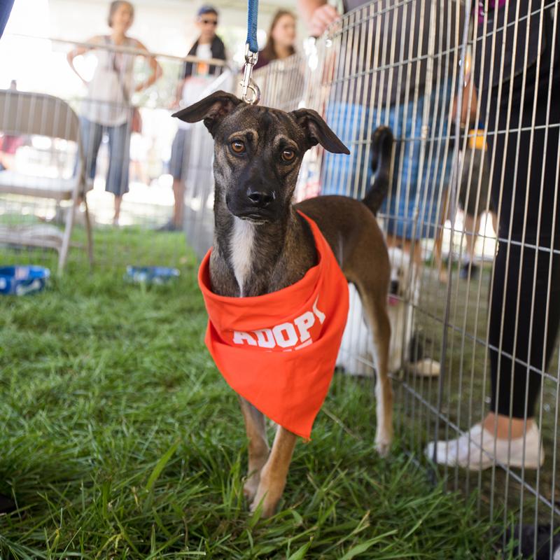dog with orange bandana