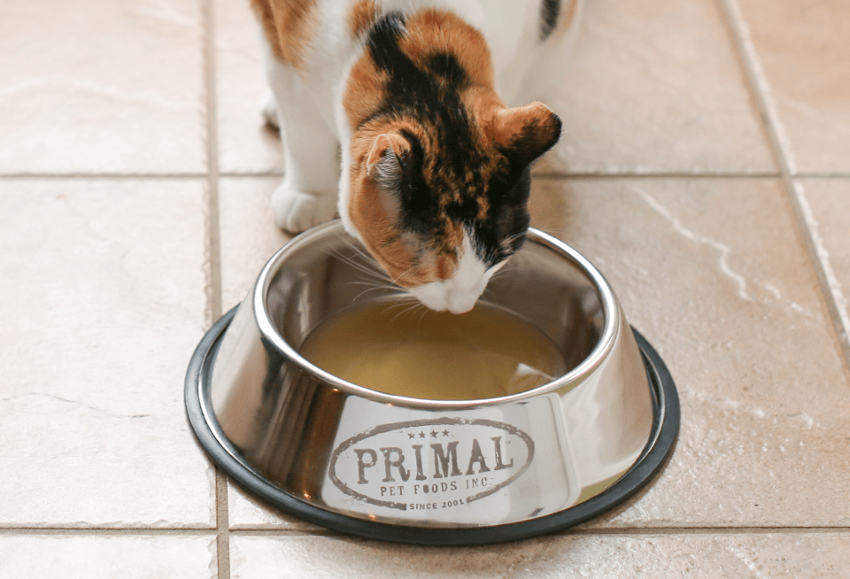 Cat drinking primal broth