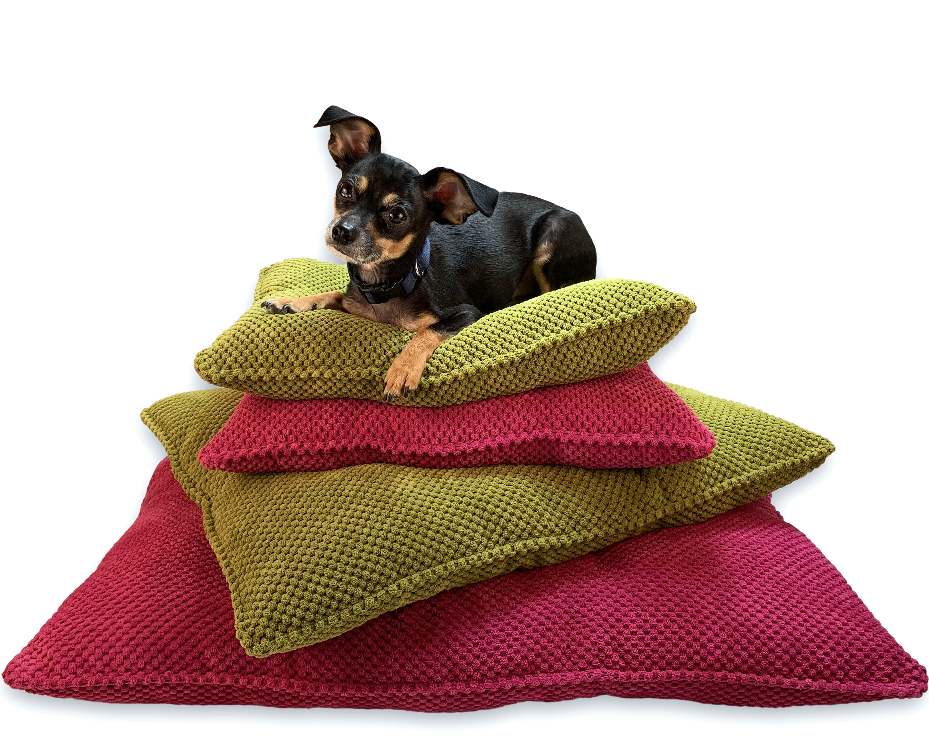 small dog on a pile of green and pink beds