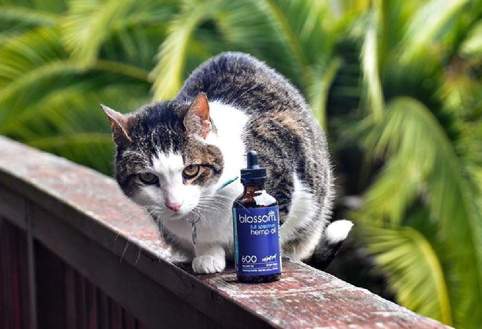Photo of cat with blossom hemp oil
