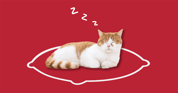 Cat laying on a pillow. Click here to learn more about calming aids.
