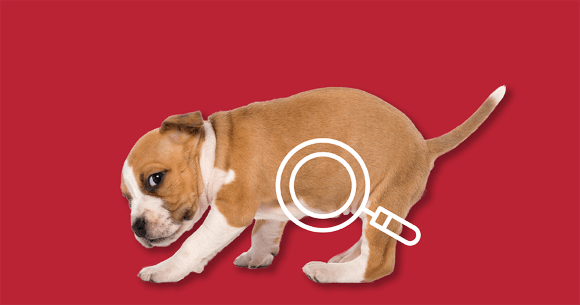 Dog with upset stomach. Click here to shop Digestive Aids.