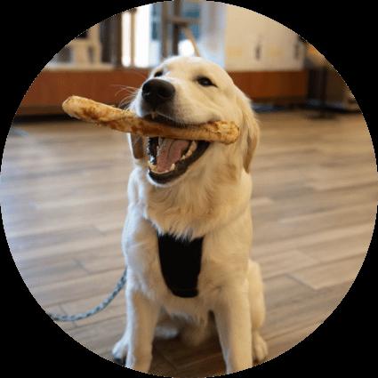 dog holding treat