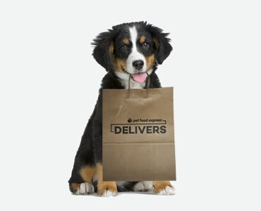Burnese Mountain Dog puppy holding a brown paper bag that says 'Pet Food Express Delivers' on it