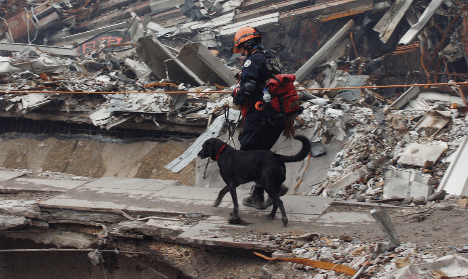 Canine first responder and handler