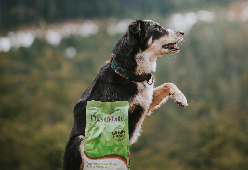 Photo of dog with firstmate product