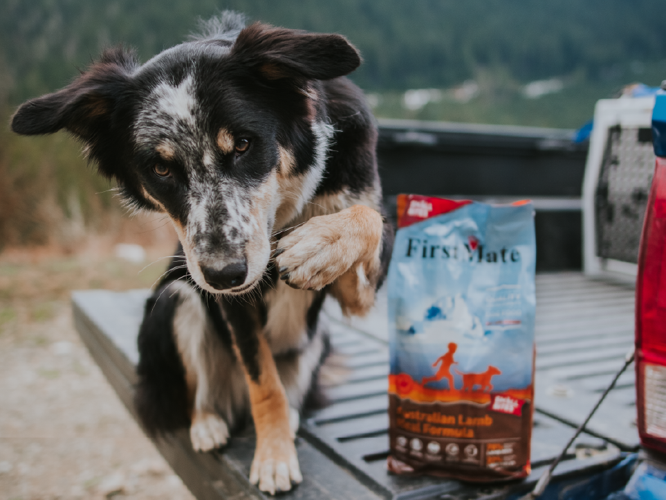 Dog with firstmate product.