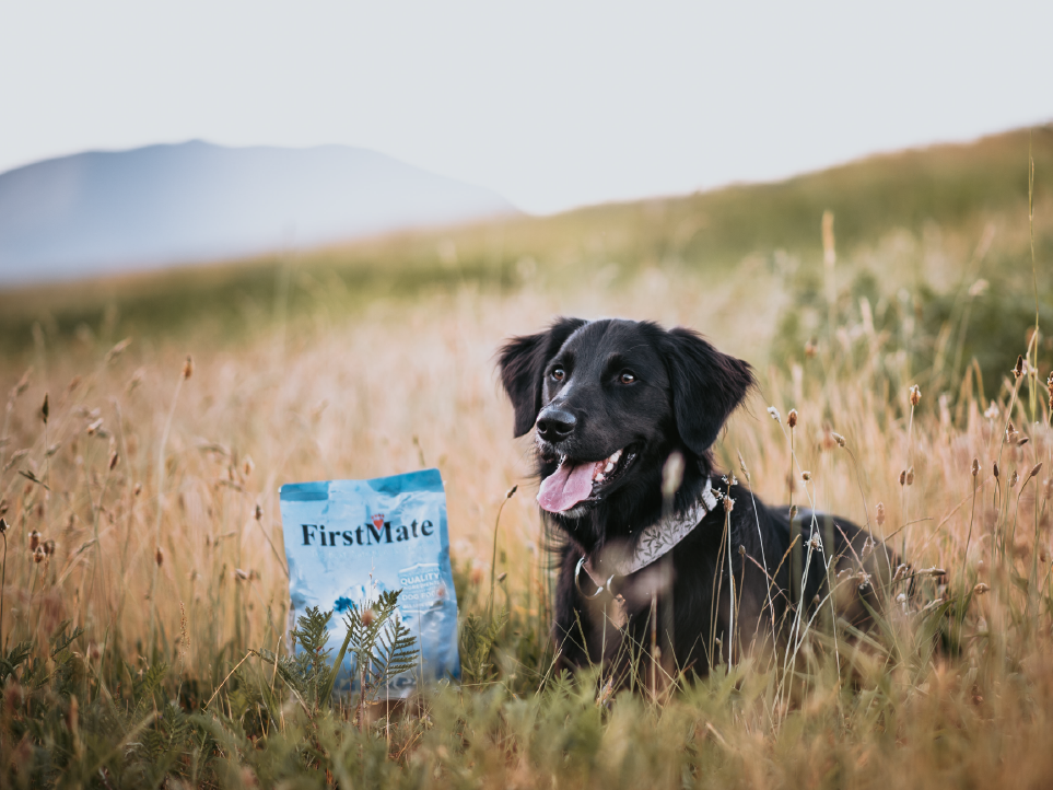 Dog with firstmate product