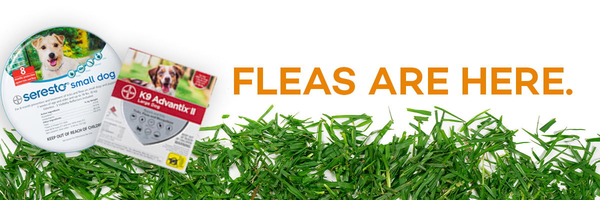 Click here for flea products.