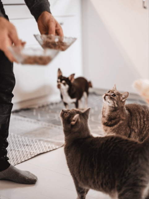 Two cats and a dog waiting for food