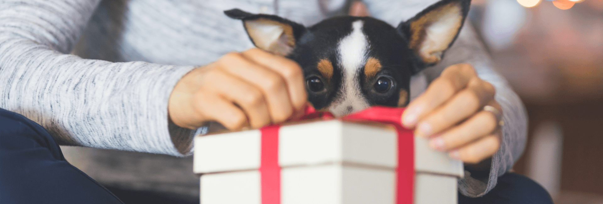 dog looking at a present
