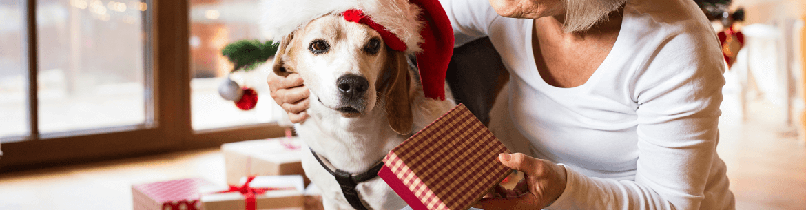 Dog surrounded by presents. Click here to shop our gift collection.
