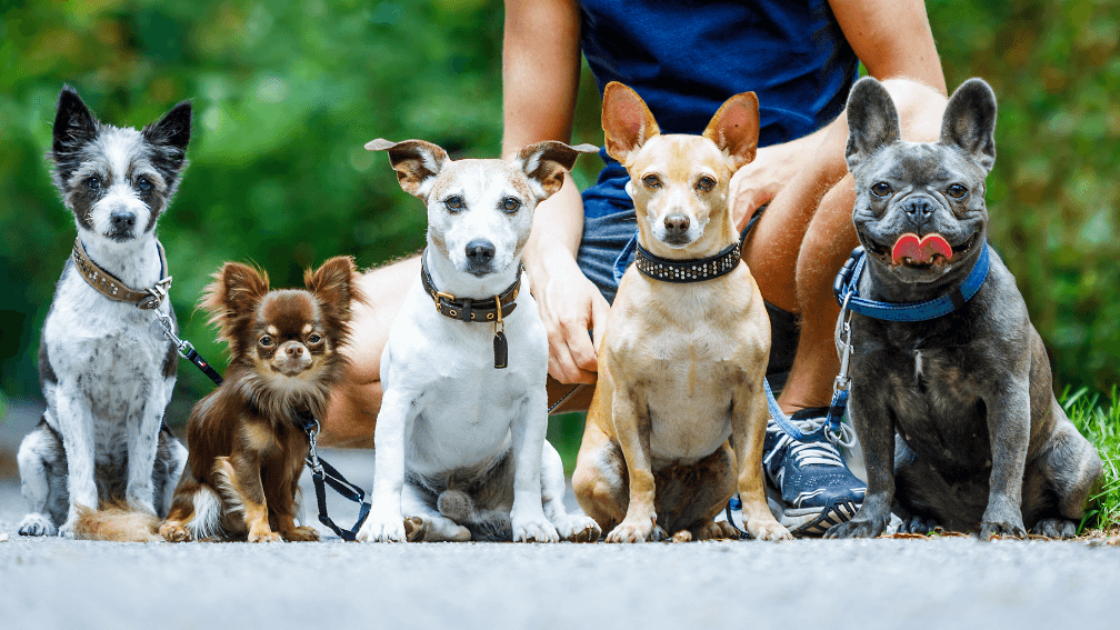 Group of dogs outside