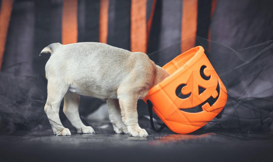 A puppy sticks its head into a candy bucket.