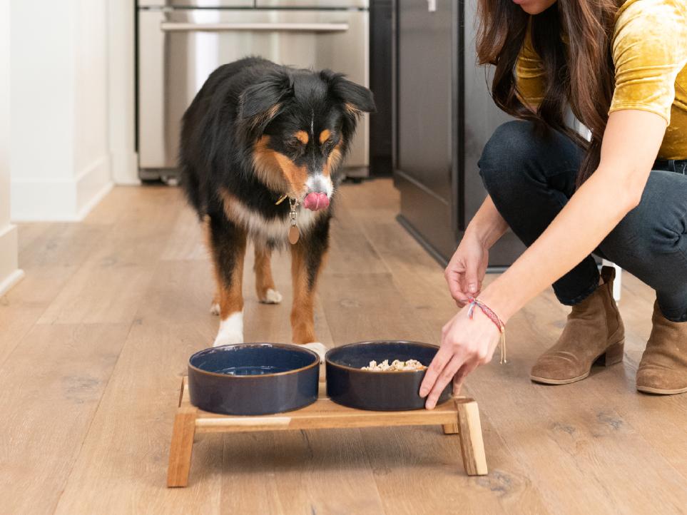 Dog looking at bowls of JustFoodForDogs food.