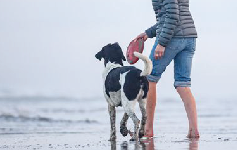 Dog on the beach with their owner