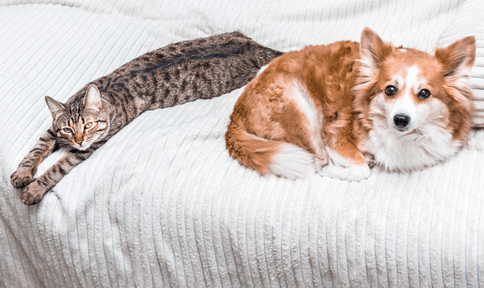 A dog and cat relax on a bed.