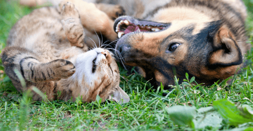 Dog and cat lying in grass