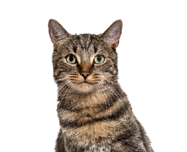 Click here to shop for new cat transition tips