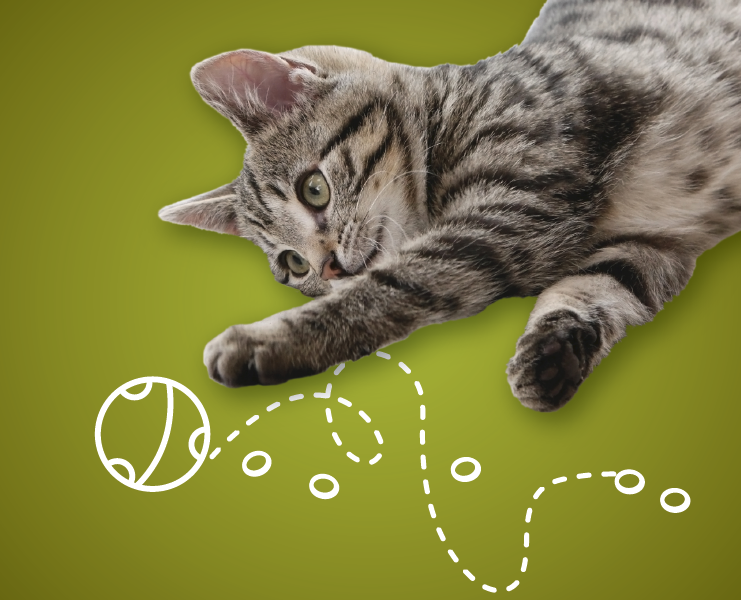 a cat with green eyes in front of a green background playing with a line animation of a ball bowncing
