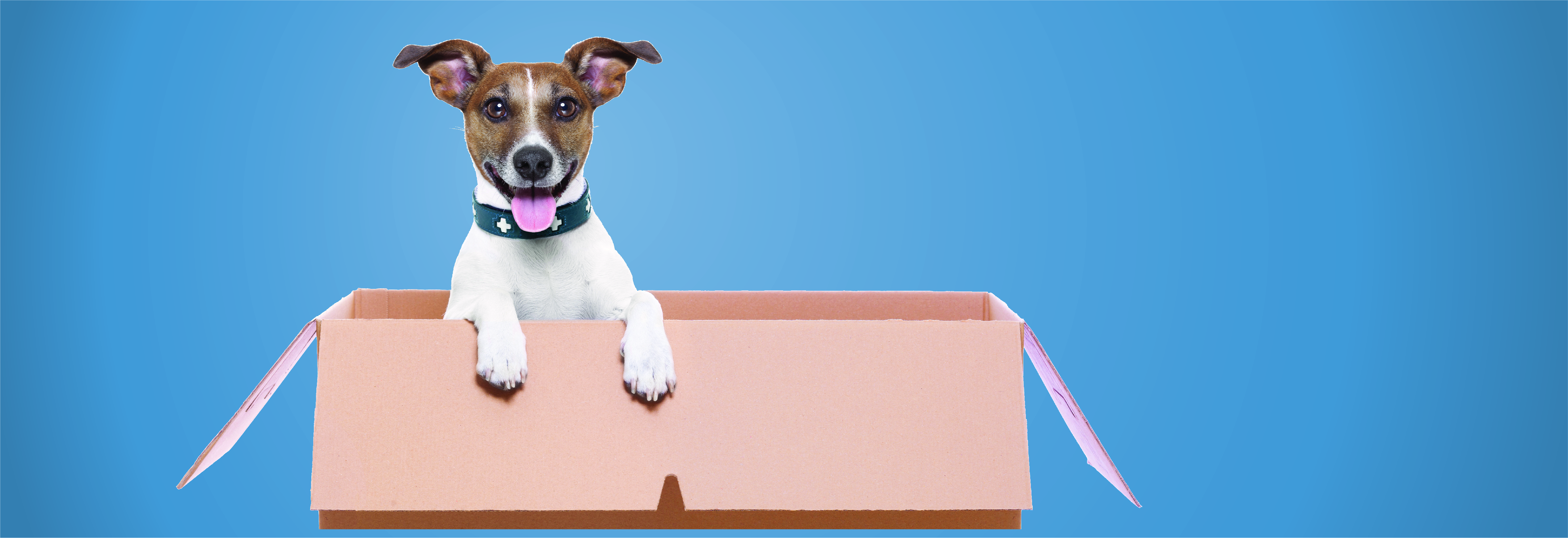 Click here to read our blog, How to adopt a pet.