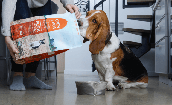Basset hound being fed Open Farm Pork Recipe kibble