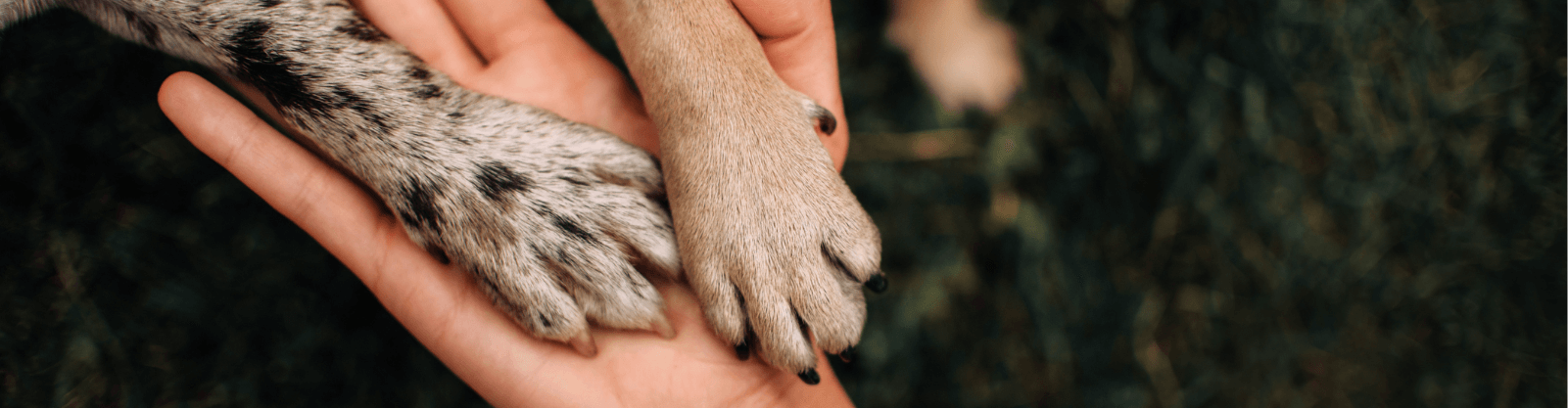 Paws placed in the palm of a person's hand