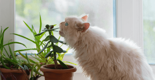 A long-haired cat leans forward to bite a leaf of a potted plant.