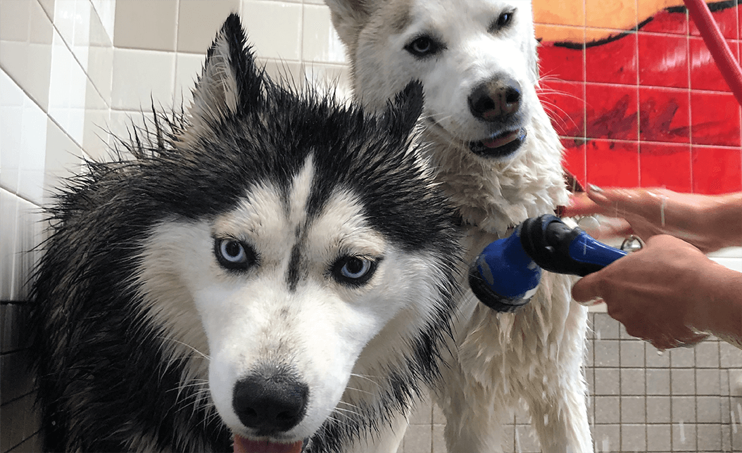 Dogs in a Pet Food Express pet wash