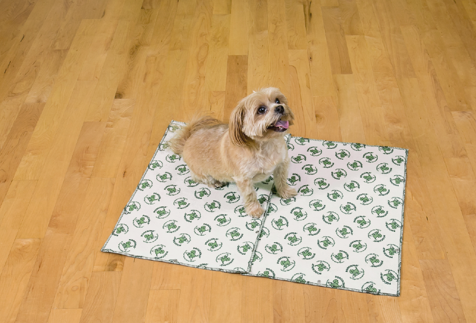 Dog sitting on a poochpad pad