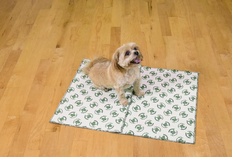 Dog sitting on a poochpad pad
