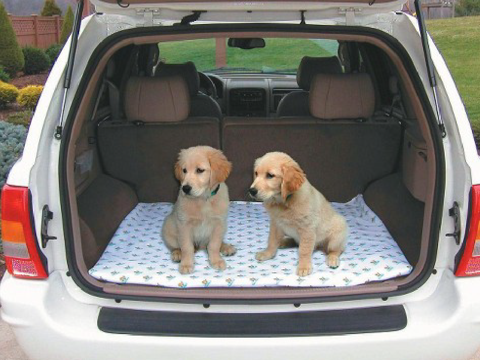 Dogs sitting in the back of a car.