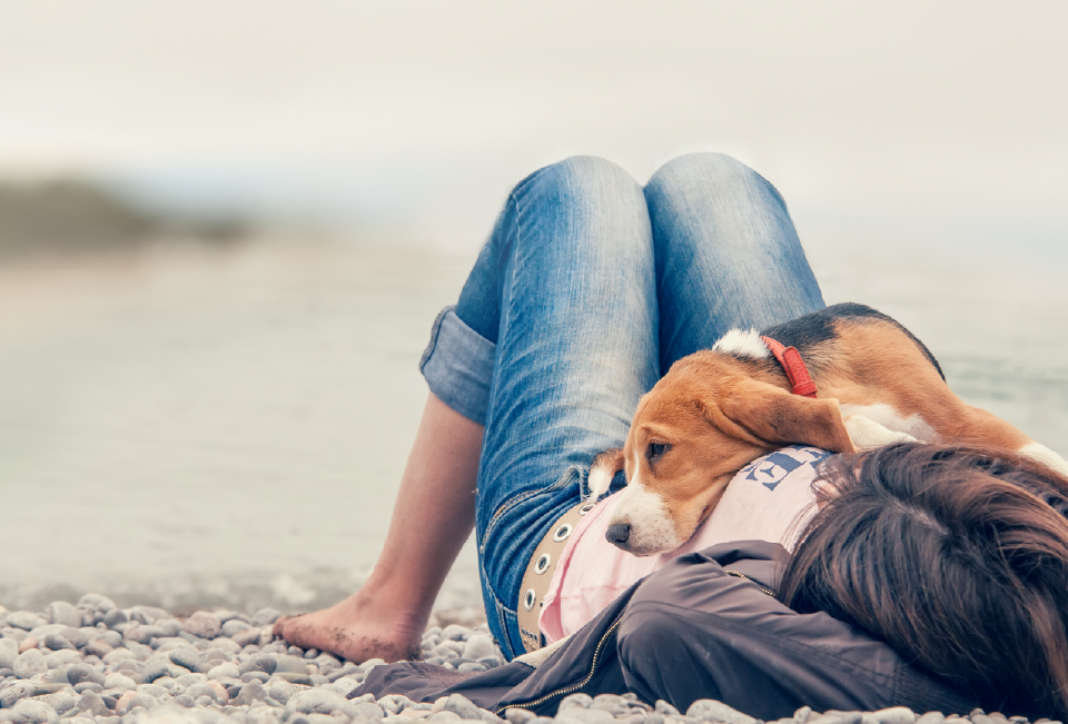 Dog laying on owner on the beach