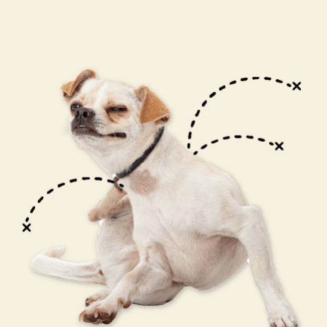 A dog scratches its neck.