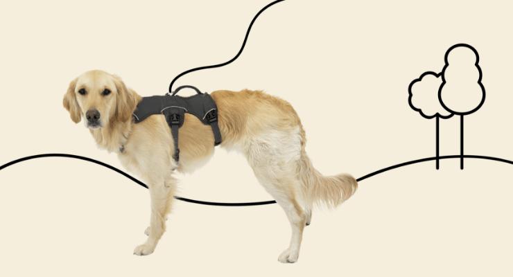 Dog wearing Ruffwear harness