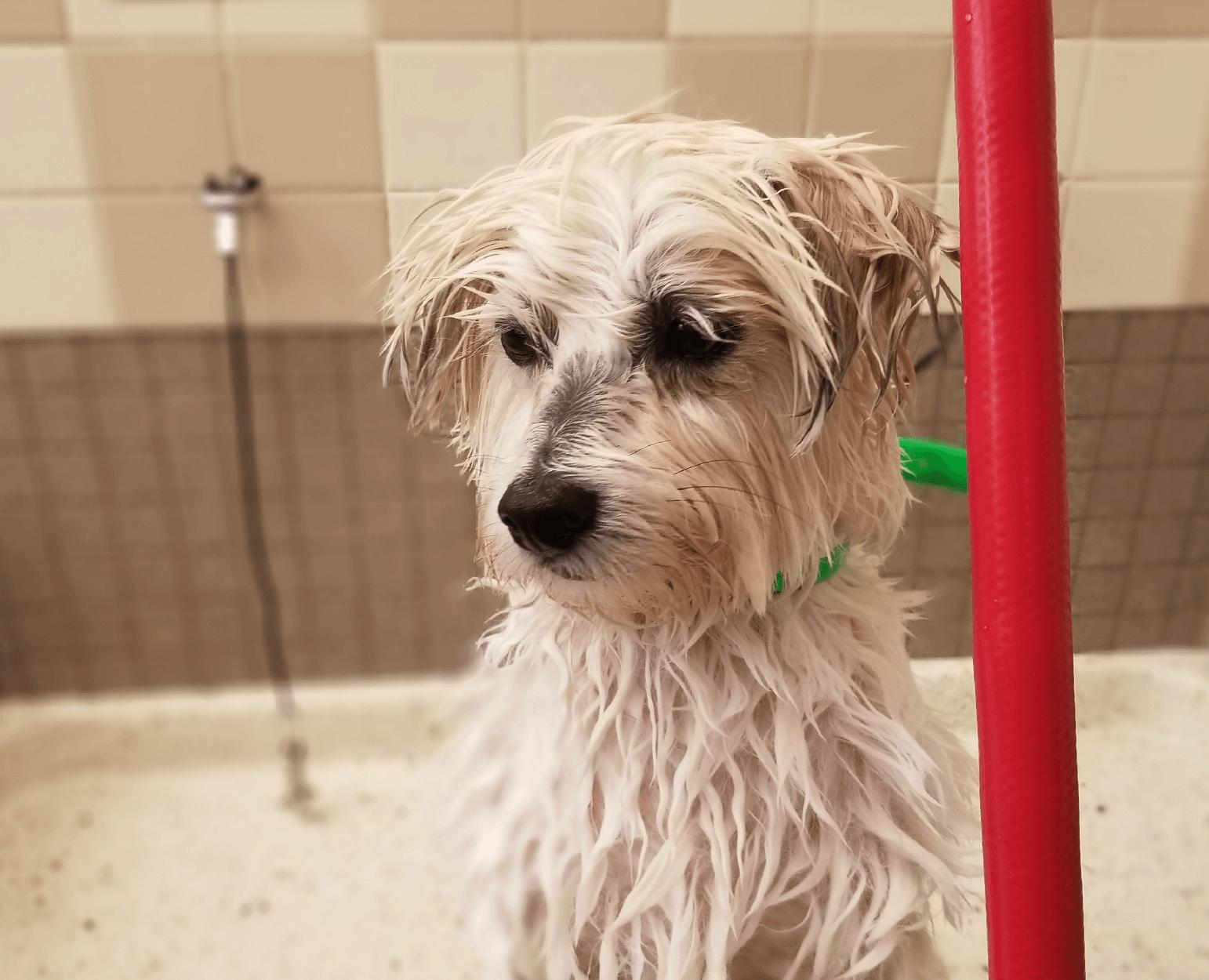 Dog at the Self Service Pet Wash