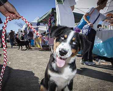 Click here to read our blog, How to take your dog to outdoor events.