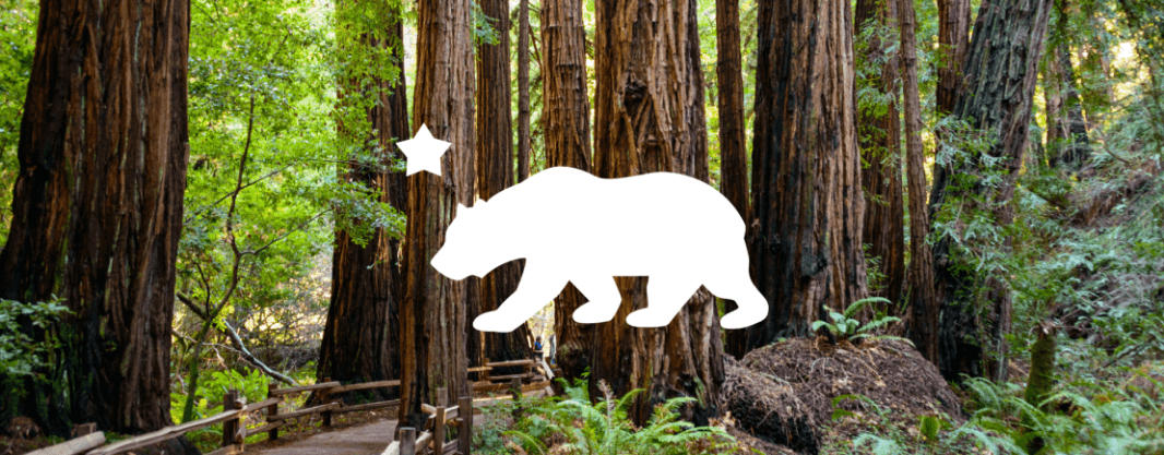 Forest background with California bear symbol