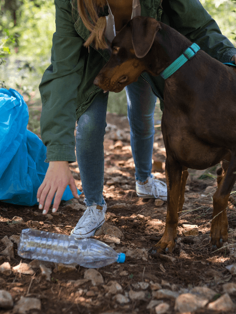 dog and person picking up plastic bottle