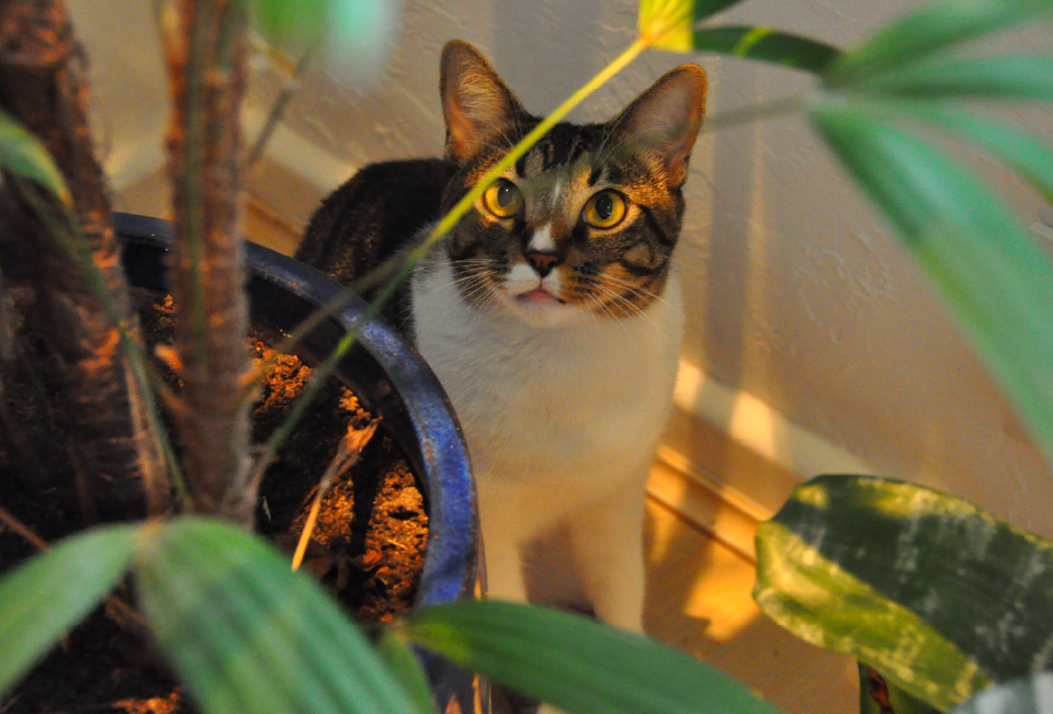 Cat hiding behind a plant