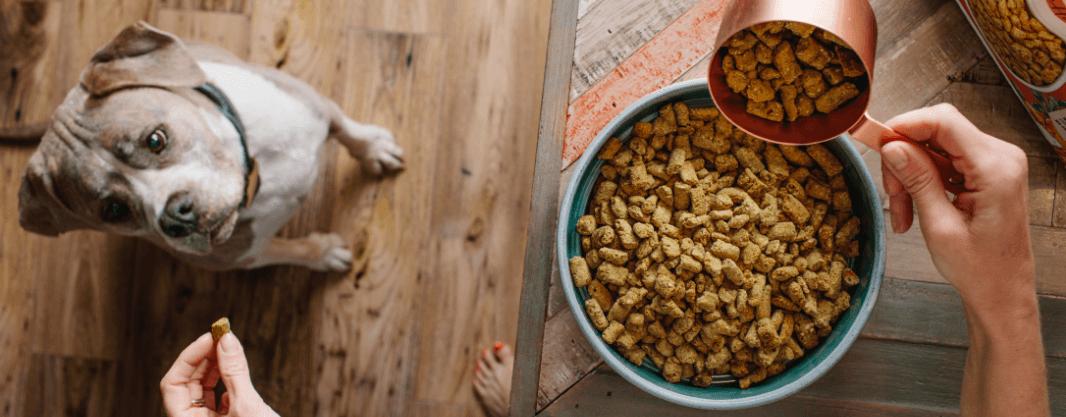 Cat eating raw food
