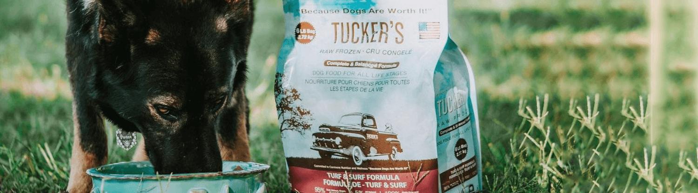 A dog eating Tucker's brand kibble